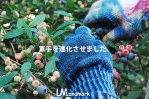画像5: Landmark/ランドマーク リストバンド付き手袋 BORDER